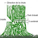 comment tronconner un arbre